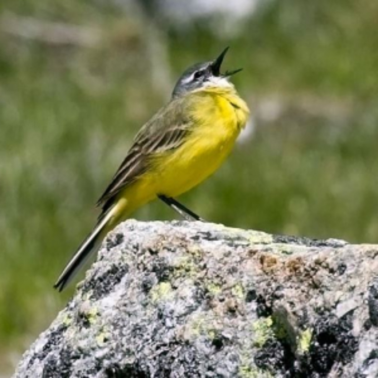 Bird watching, ornithological routes, routes gredos